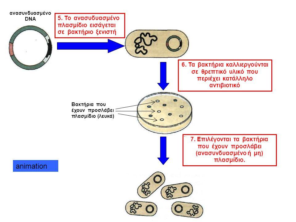 E coli πλασμίδιο 2. Κόψιμο με την ίδια περιοριστική ενδονουκλεάση Θέση που κόβει η περιοριστική ενδονουκλεάση Γονίδιο ανθεκτικότητας σε αντιβιοτικό 1.