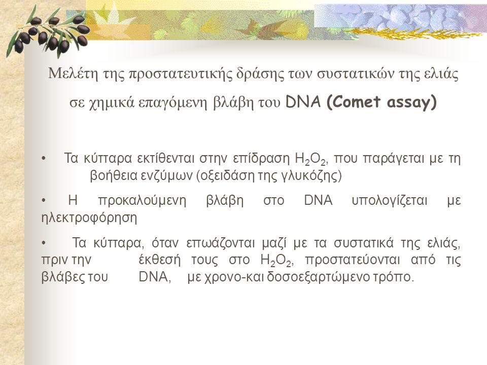 Μελέτη της προστατευτικής δράσης των συστατικών της ελιάς σε χημικά επαγόμενη βλάβη του DNA (Comet assay) • Τα κύτταρα εκτίθενται στην επίδραση H 2 O 2, που παράγεται με τη βοήθεια ενζύμων (οξειδάση της γλυκόζης) • Η προκαλούμενη βλάβη στο DNA υπολογίζεται με ηλεκτροφόρηση • Τα κύτταρα, όταν επωάζονται μαζί με τα συστατικά της ελιάς, πριν την έκθεσή τους στο H 2 O 2, προστατεύονται από τις βλάβες του DNA, με χρονο-και δοσοεξαρτώμενο τρόπο.