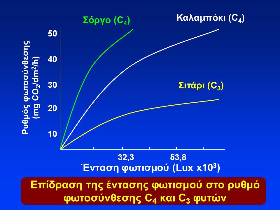 Επίδραση της έντασης φωτισμού στο ρυθμό φωτοσύνθεσης C 4 και C 3 φυτών Ένταση φωτισμού (Lux x10 3 ) Ρυθμός φωτοσύνθεσης (mg CO 2 /dm 2 /h) Καλαμπόκι (