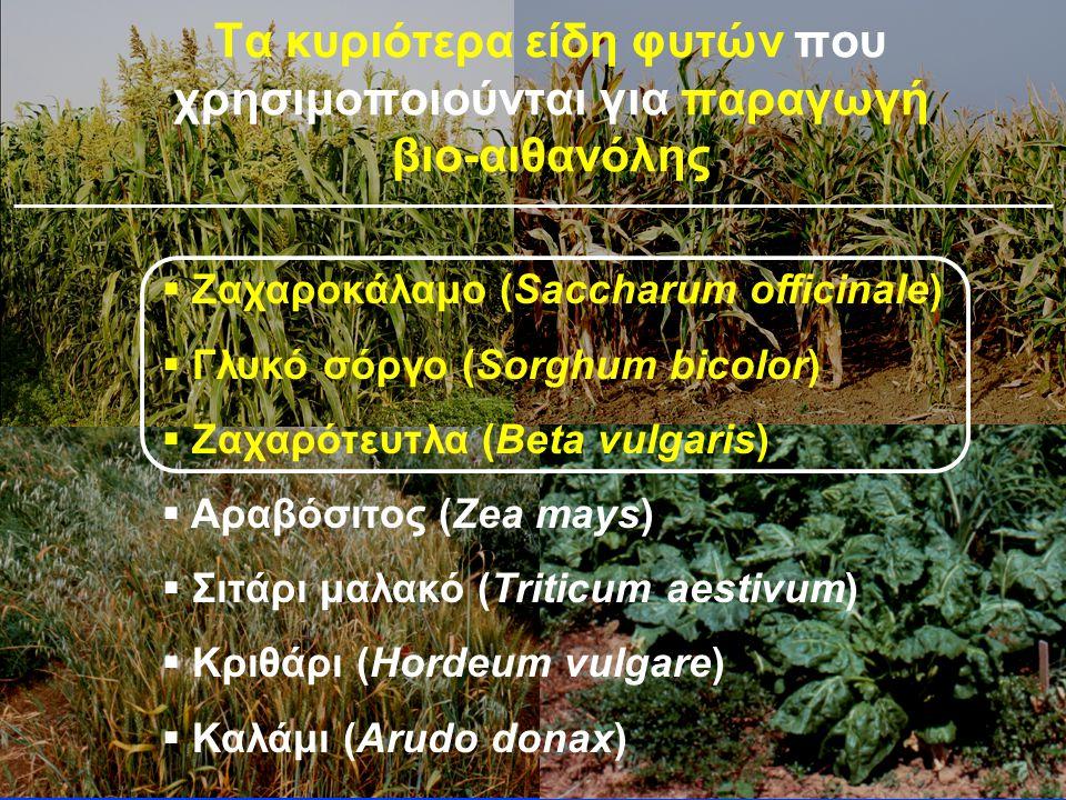   Ζαχαροκάλαμο (Saccharum officinale)   Γλυκό σόργο (Sorghum bicolor)   Ζαχαρότευτλα (Beta vulgaris)   Αραβόσιτος (Zea mays)   Σιτάρι μαλακό