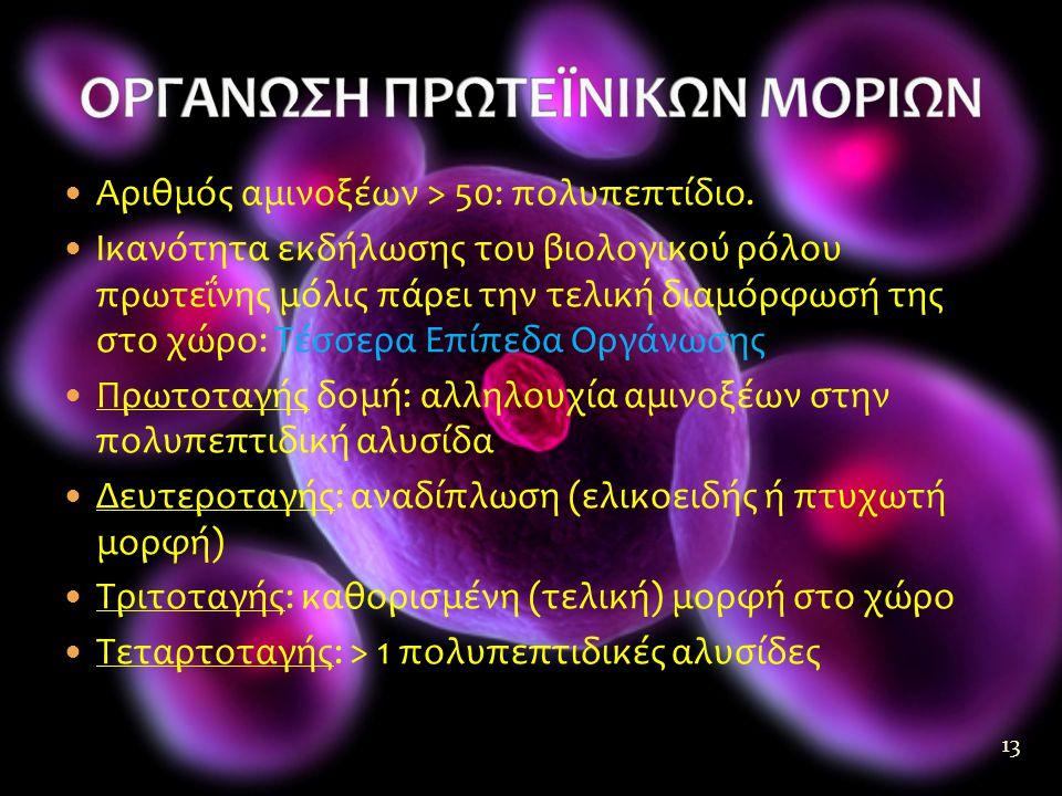  Αριθμός αμινοξέων > 50: πολυπεπτίδιο.