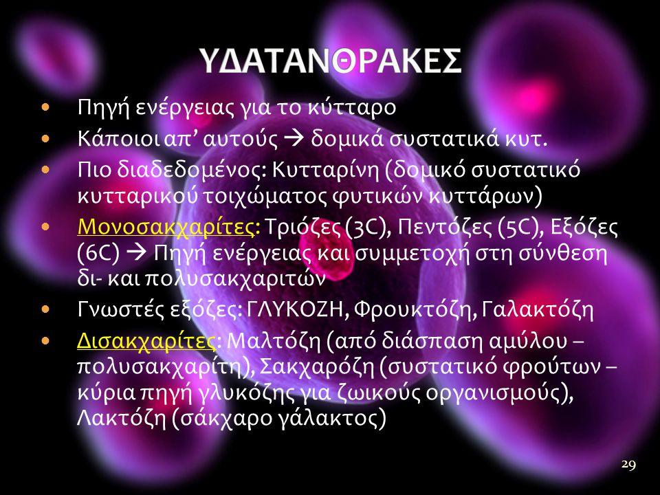 29  Πηγή ενέργειας για το κύτταρο  Κάποιοι απ' αυτούς  δομικά συστατικά κυτ.