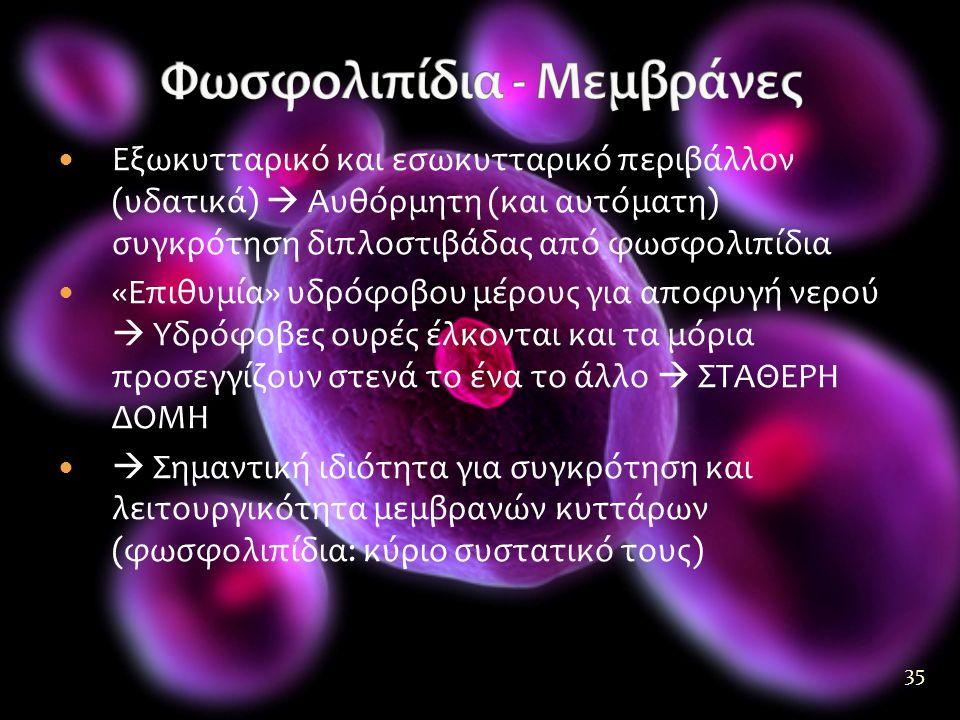 35  Εξωκυτταρικό και εσωκυτταρικό περιβάλλον (υδατικά)  Αυθόρμητη (και αυτόματη) συγκρότηση διπλοστιβάδας από φωσφολιπίδια  «Επιθυμία» υδρόφοβου μέρους για αποφυγή νερού  Υδρόφοβες ουρές έλκονται και τα μόρια προσεγγίζουν στενά το ένα το άλλο  ΣΤΑΘΕΡΗ ΔΟΜΗ   Σημαντική ιδιότητα για συγκρότηση και λειτουργικότητα μεμβρανών κυττάρων (φωσφολιπίδια: κύριο συστατικό τους)