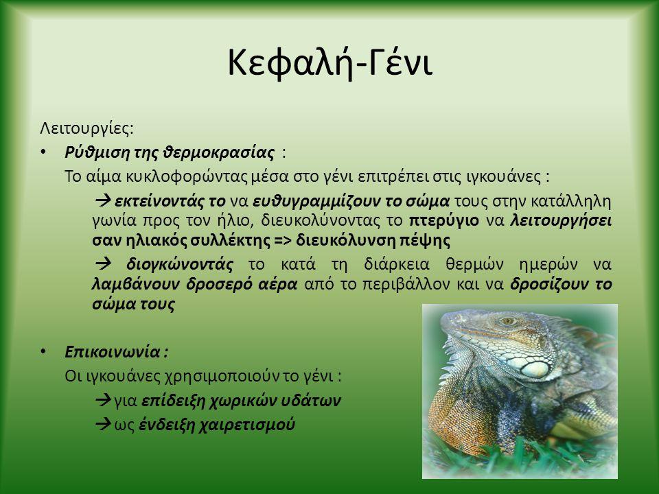 Κεφαλή-Γένι Λειτουργίες: • Ρύθμιση της θερμοκρασίας : Το αίμα κυκλοφορώντας μέσα στο γένι επιτρέπει στις ιγκουάνες :  εκτείνοντάς το να ευθυγραμμίζου