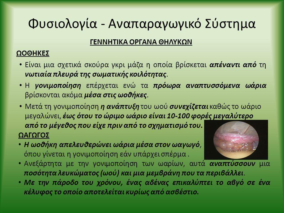 Φυσιολογία - Αναπαραγωγικό Σύστημα ΓΕΝΝΗΤΙΚΑ ΟΡΓΑΝΑ ΘΗΛΥΚΩΝ ΩΟΘΗΚΕΣ • Είναι μια σχετικά σκούρα γκρι μάζα η οποία βρίσκεται απέναντι από τη νωτιαία πλε