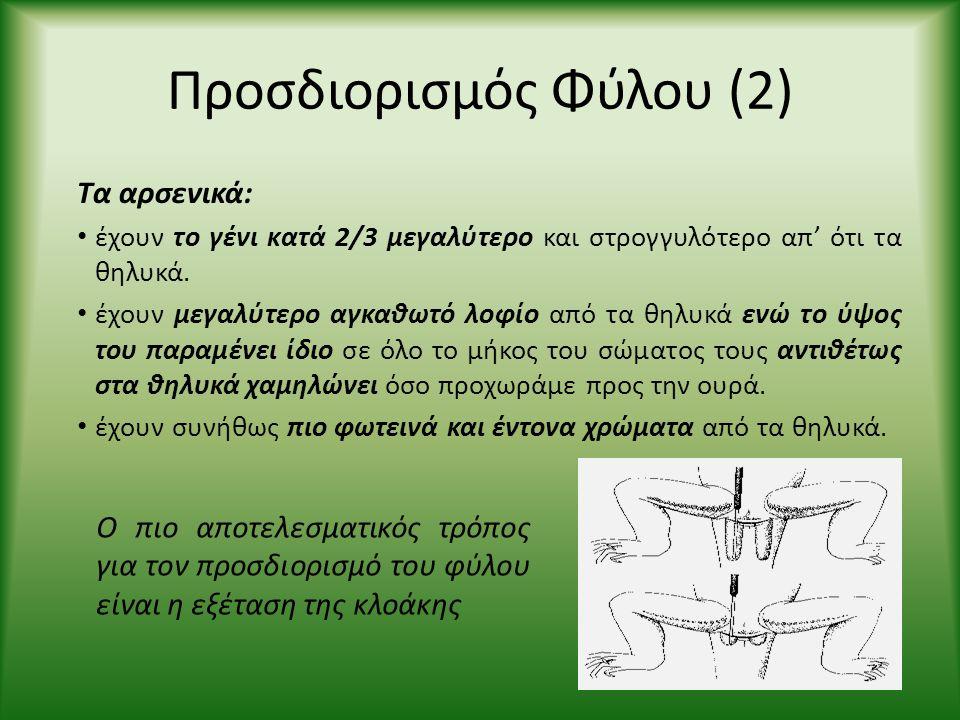 Προσδιορισμός Φύλου (2) Τα αρσενικά: • έχουν το γένι κατά 2/3 μεγαλύτερο και στρογγυλότερο απ' ότι τα θηλυκά. • έχουν μεγαλύτερο αγκαθωτό λοφίο από τα