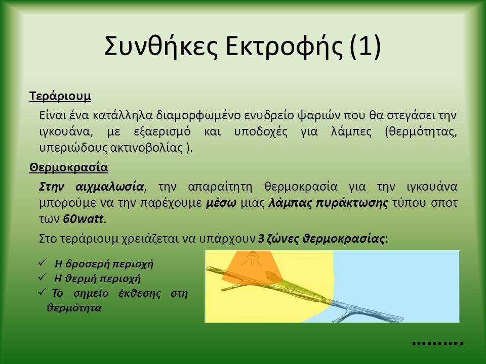 Συνθήκες Εκτροφής (1) Τεράριουμ Είναι ένα κατάλληλα διαμορφωμένο ενυδρείο ψαριών που θα στεγάσει την ιγκουάνα, με εξαερισμό και υποδοχές για λάμπες (θ