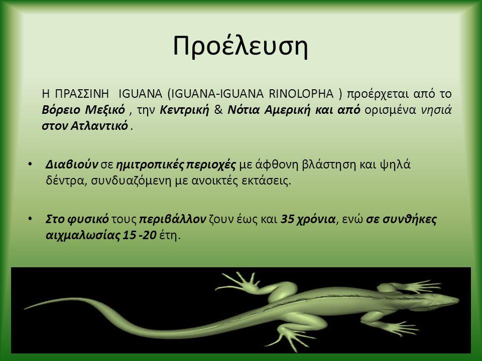 Προέλευση Η ΠΡΑΣΣΙΝΗ IGUANA (IGUANA-IGUANA RINOLOPHA ) προέρχεται από το Βόρειο Μεξικό, την Κεντρική & Νότια Αμερική και από ορισμένα νησιά στον Ατλαν