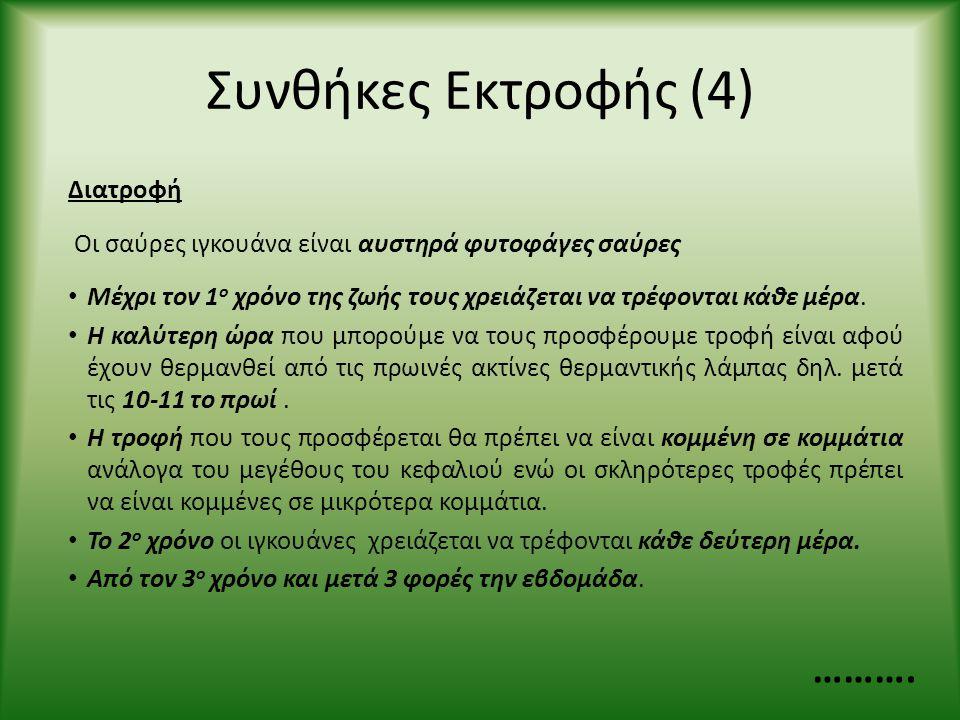 Συνθήκες Εκτροφής (4) Διατροφή Οι σαύρες ιγκουάνα είναι αυστηρά φυτοφάγες σαύρες • Μέχρι τον 1 ο χρόνο της ζωής τους χρειάζεται να τρέφονται κάθε μέρα