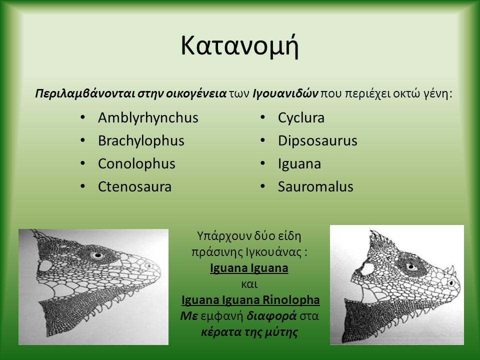 Κατανομή • Amblyrhynchus • Brachylophus • Conolophus • Ctenosaura • Cyclura • Dipsosaurus • Iguana • Sauromalus Περιλαμβάνονται στην οικογένεια των Ιγ