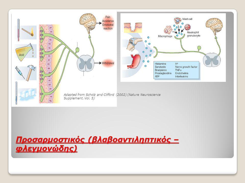 Προσαρμοστικός (βλαβοαντιληπτικός – φλεγμονώδης) Adapted from Scholz and Clifford (2002) (Nature Neuroscience Supplement.
