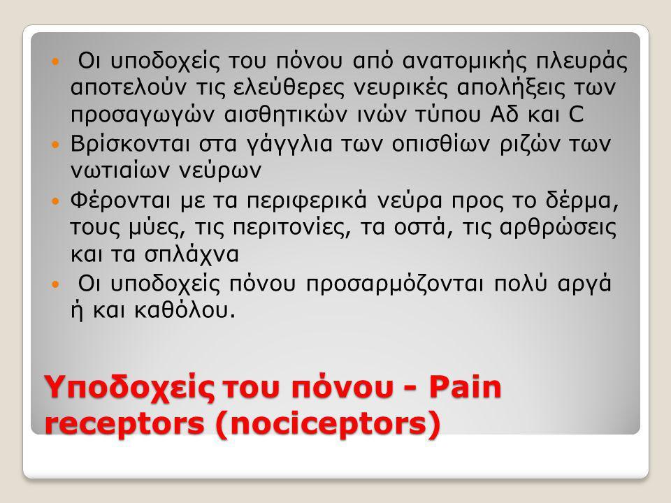 Υποδοχείς του πόνου - Pain receptors (nociceptors)  Οι υποδοχείς του πόνου από ανατομικής πλευράς αποτελούν τις ελεύθερες νευρικές απολήξεις των προσαγωγών αισθητικών ινών τύπου Aδ και C  Βρίσκονται στα γάγγλια των οπισθίων ριζών των νωτιαίων νεύρων  Φέρονται με τα περιφερικά νεύρα προς το δέρμα, τους μύες, τις περιτονίες, τα οστά, τις αρθρώσεις και τα σπλάχνα  Οι υποδοχείς πόνου προσαρμόζονται πολύ αργά ή και καθόλου.