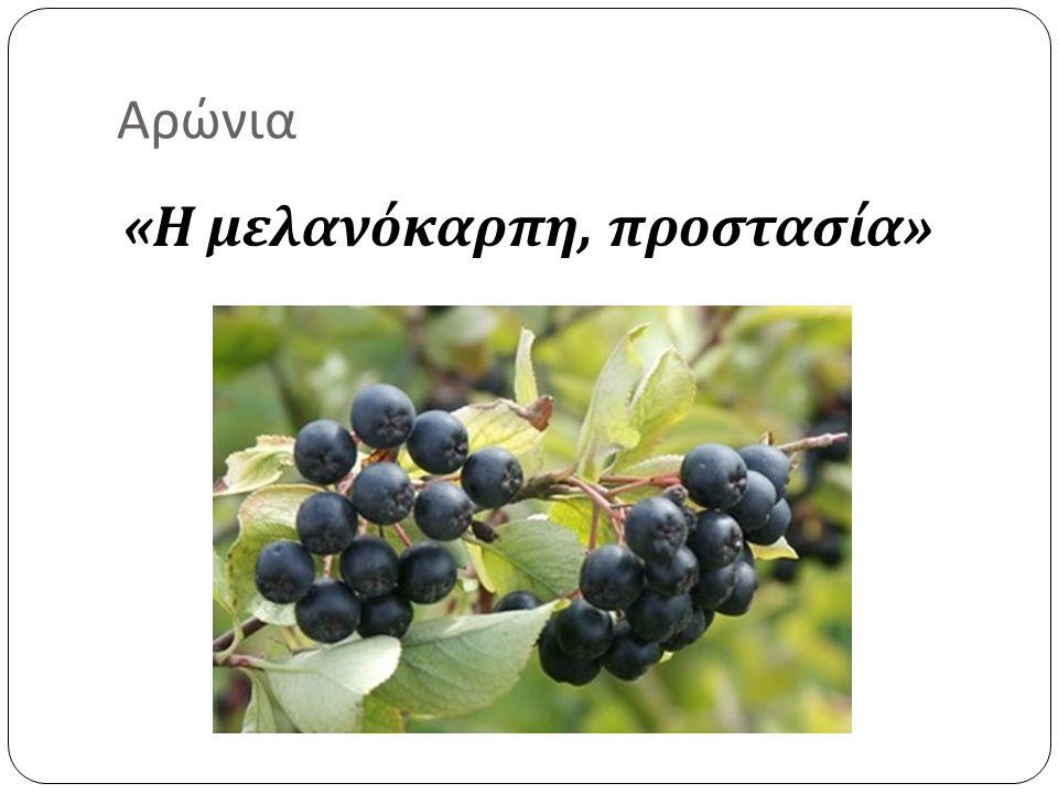 Αρώνια « Η μελανόκαρπη, προστασία »