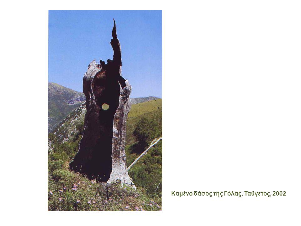 Καμένο δάσος της Γόλας, Ταϋγετος, 2002