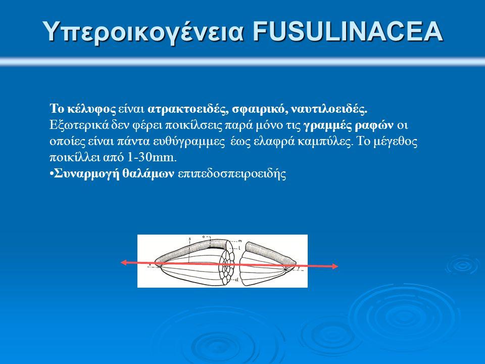 Υπεροικογένεια FUSULINACEA Το κέλυφος είναι ατρακτοειδές, σφαιρικό, ναυτιλοειδές. Εξωτερικά δεν φέρει ποικίλσεις παρά μόνο τις γραμμές ραφών οι οποίες
