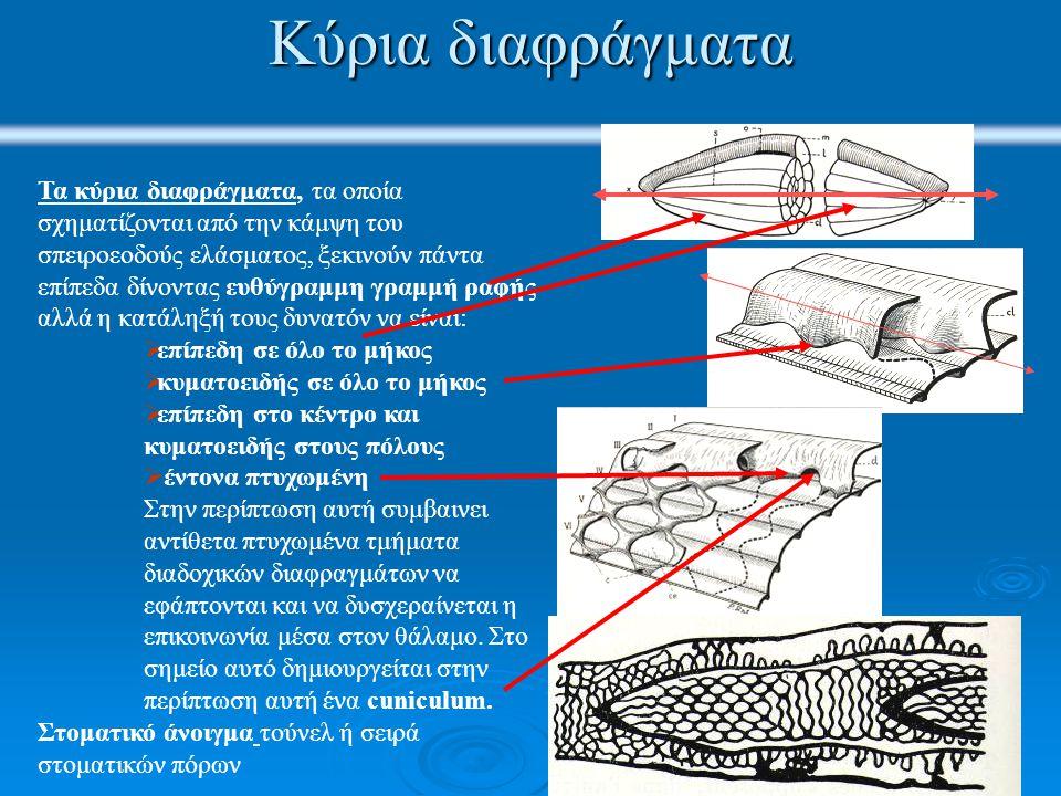 Κύρια διαφράγματα Τα κύρια διαφράγματα, τα οποία σχηματίζονται από την κάμψη του σπειροεοδούς ελάσματος, ξεκινούν πάντα επίπεδα δίνοντας ευθύγραμμη γραμμή ραφής αλλά η κατάληξή τους δυνατόν να είναι:  επίπεδη σε όλο το μήκος  κυματοειδής σε όλο το μήκος  επίπεδη στο κέντρο και κυματοειδής στους πόλους  έντονα πτυχωμένη Στην περίπτωση αυτή συμβαινει αντίθετα πτυχωμένα τμήματα διαδοχικών διαφραγμάτων να εφάπτονται και να δυσχεραίνεται η επικοινωνία μέσα στον θάλαμο.