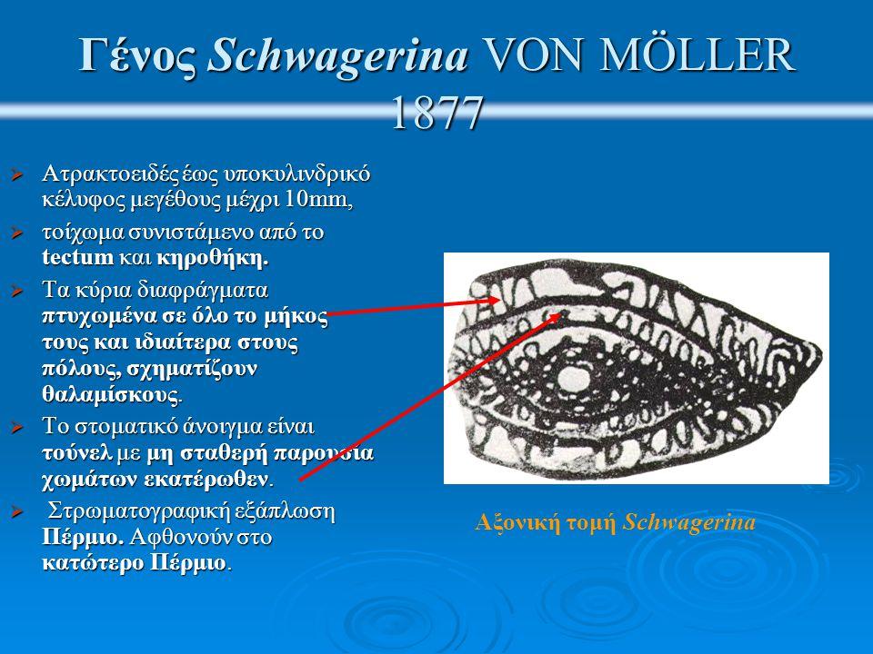 Γένος Schwagerina VON MÖLLER 1877  Ατρακτοειδές έως υποκυλινδρικό κέλυφος μεγέθους μέχρι 10mm,  τοίχωμα συνιστάμενο από το tectum και κηροθήκη.  Τα