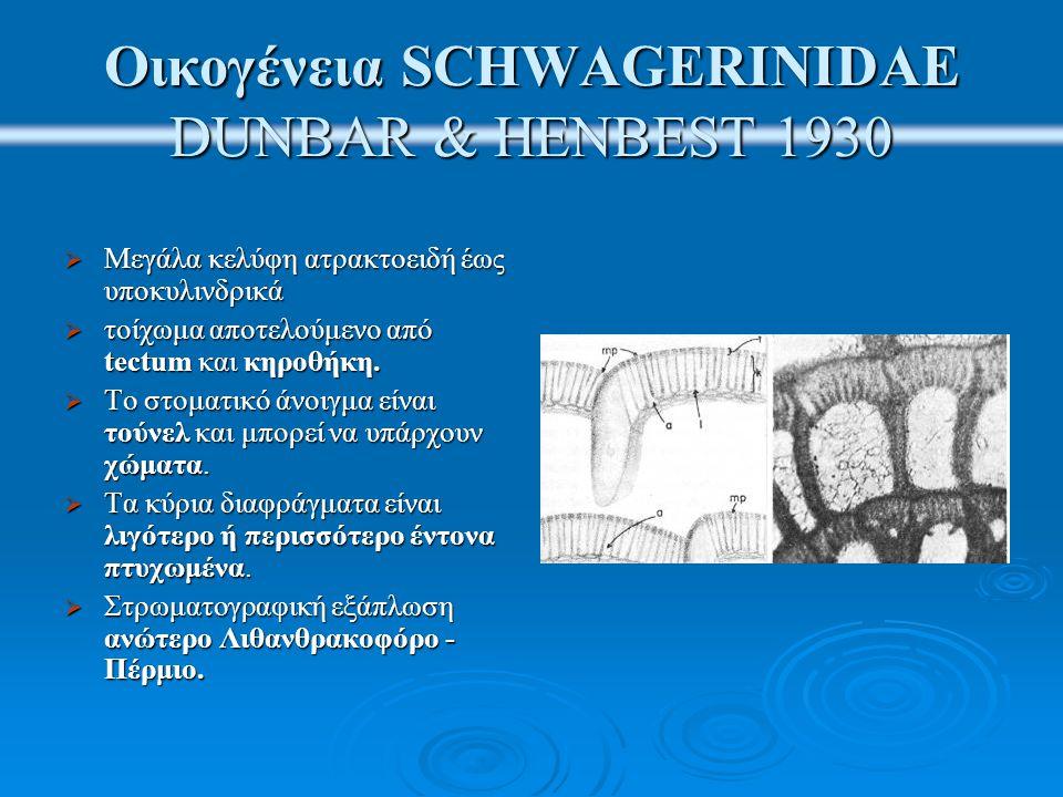 Οικογένεια SCHWAGERINIDAE DUNBAR & HENBEST 1930  Μεγάλα κελύφη ατρακτοειδή έως υποκυλινδρικά  τοίχωμα αποτελούμενο από tectum και κηροθήκη.