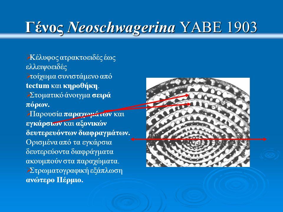 Γένος Neoschwagerina YABE 1903  Κέλυφος ατρακτοειδές έως ελλειψοειδές  τοίχωμα συνιστάμενο από tectum και κηροθήκη.  Στοματικό άνοιγμα σειρά πόρων.