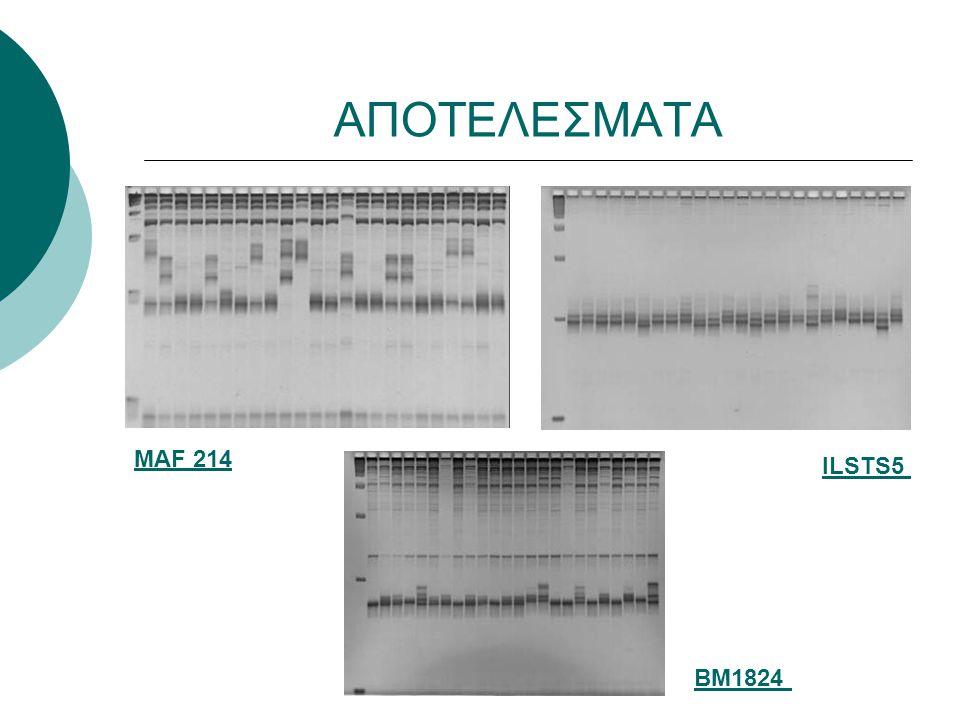 ΑΠΟΤΕΛΕΣΜΑΤΑ Ο συνολικός αριθμός αλληλόμορφων γονιδίων για τους γονιδιακούς τόπους κυμάνθηκε από 12 έως 49 (BM1824 και MAF 214, αντίστοιχα), ενώ ο μέσος αριθμός αλληλόμορφων στο σύνολο των πληθυσμών και των γονιδιακών τόπων ήταν 13,9.