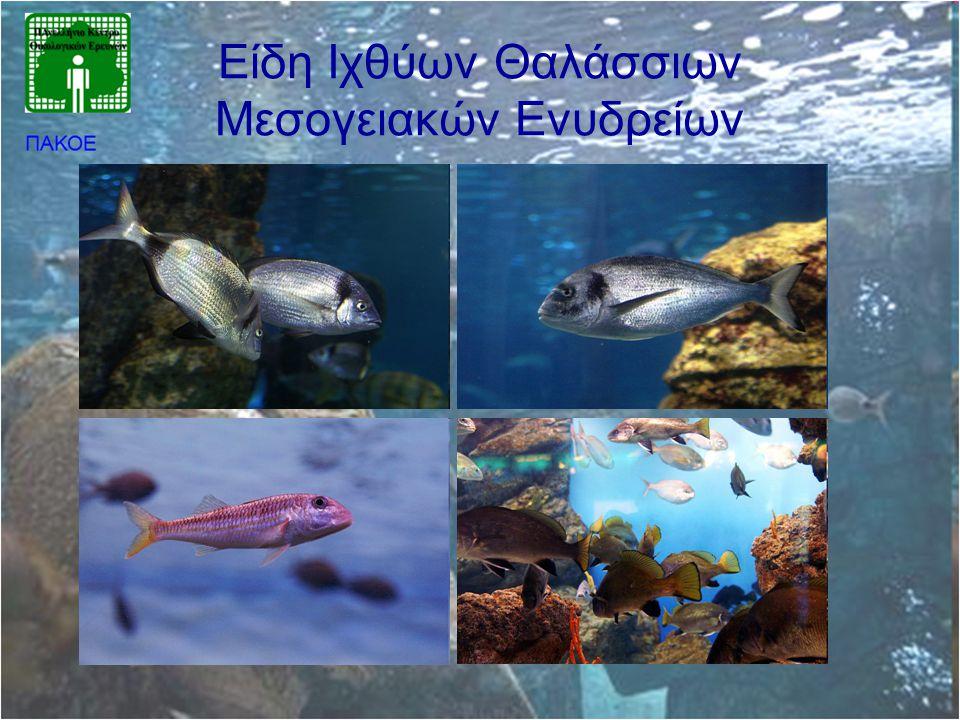 Είδη Ιχθύων Θαλάσσιων Μεσογειακών Ενυδρείων