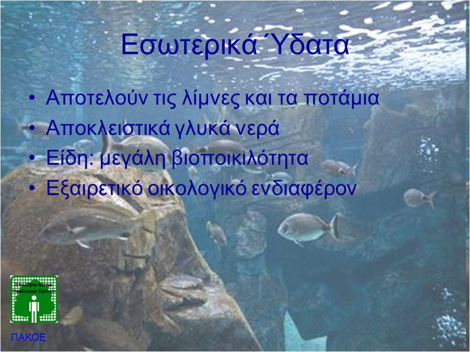 Εσωτερικά Ύδατα •Αποτελούν τις λίμνες και τα ποτάμια •Αποκλειστικά γλυκά νερά •Είδη: μεγάλη βιοποικιλότητα •Εξαιρετικό οικολογικό ενδιαφέρον