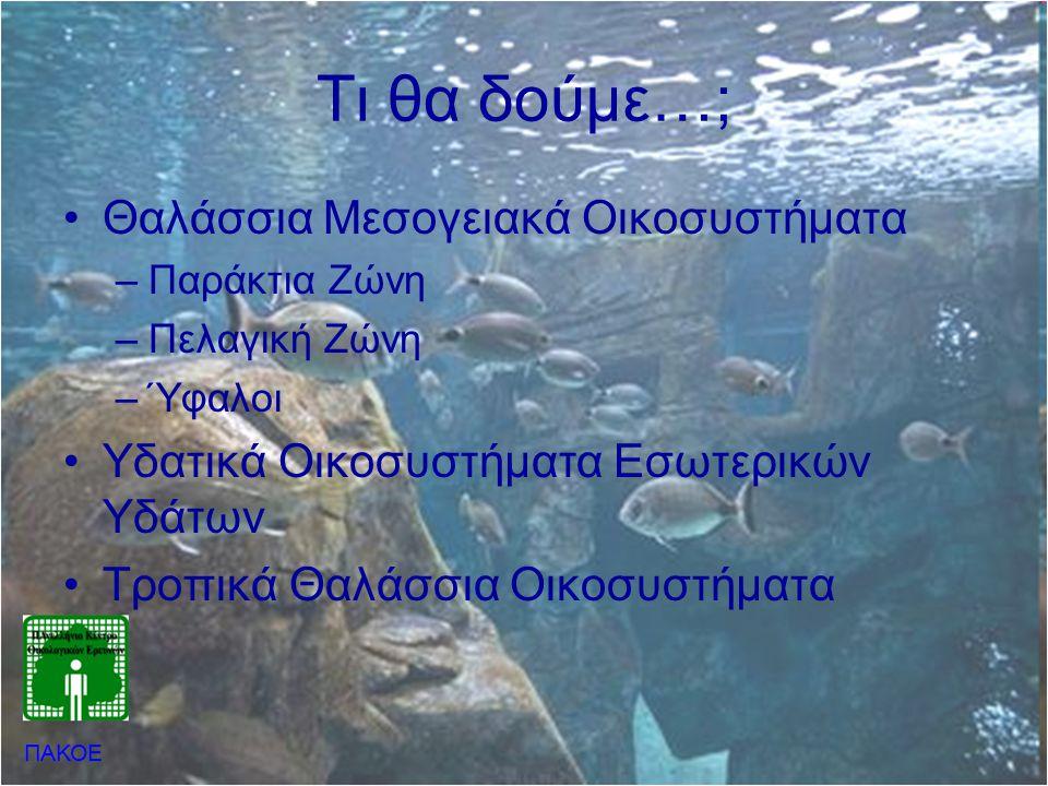 Θαλάσσια Μεσογειακά Οικοσυστήματα •Παράκτια Ζώνη –Συναντώνται οι περισσότεροι θαλάσσιοι οργανισμοί –Υψηλή πρωτογενή παραγωγικότητα –Παράκτια αλιεία •Πελαγική Ζώνη –Αποτελεί το μεγαλύτερο ποσοστό των θαλασσών παγκοσμίως –Ρυθμίζει το κλίμα και την ατμόσφαιρα