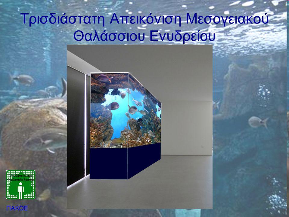 Λειτουργία Ενυδρείου •Θαλασσινό Νερό → instant ocean •Γλυκό νερό → Δίκτυο ύδρευσης / γεώτρηση •Ανακύκλωση νερού –Οικονομία –Διαχείριση –Ποιότητα