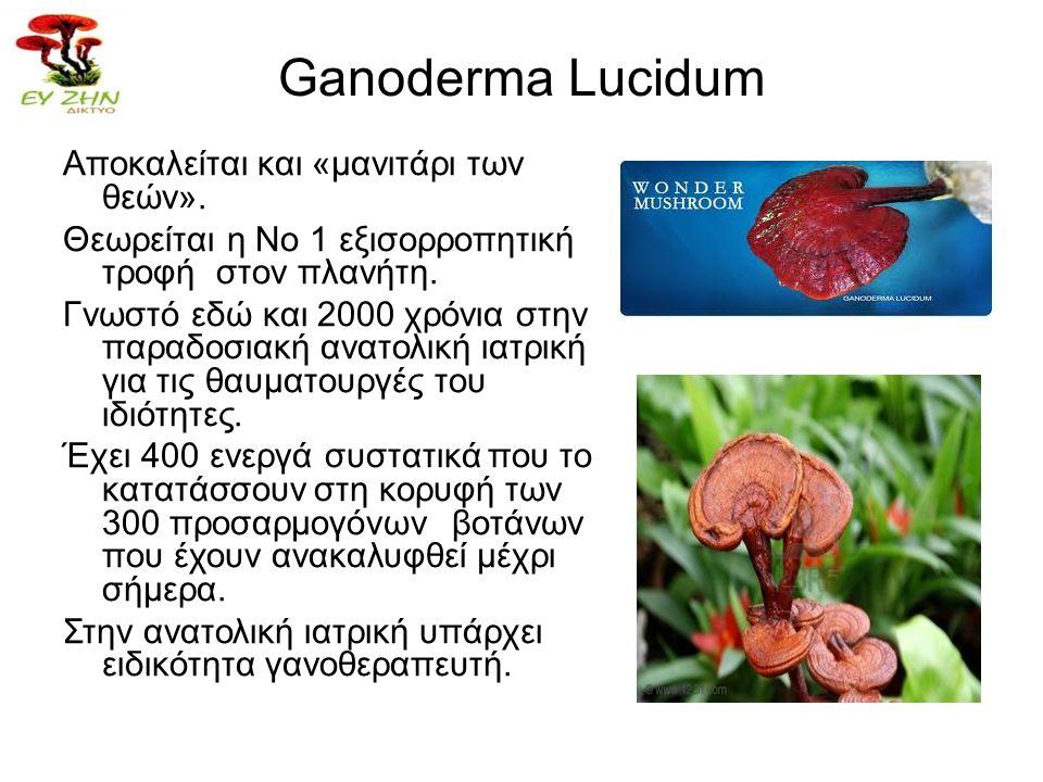 Ganoderma Lucidum Αποκαλείται και «μανιτάρι των θεών». Θεωρείται η Νο 1 εξισορροπητική τροφή στον πλανήτη. Γνωστό εδώ και 2000 χρόνια στην παραδοσιακή