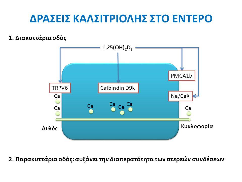 TRPV6Calbindin D9k PMCA1b Na/CaX 1,25(OH) 2 D 3 Αυλός Κυκλοφορία Ca ΔΡΑΣΕΙΣ ΚΑΛΣΙΤΡΙΟΛΗΣ ΣΤΟ ΕΝΤΕΡΟ 2.
