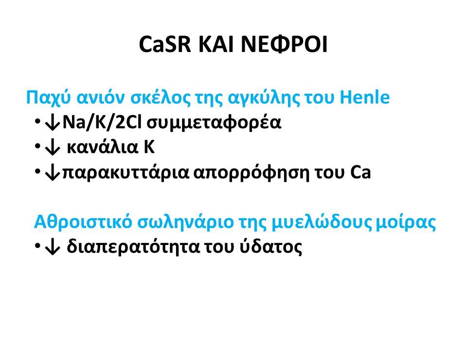 Παχύ ανιόν σκέλος της αγκύλης του Henle • ↓Na/K/2Cl συμμεταφορέα • ↓ κανάλια Κ • ↓παρακυττάρια απορρόφηση του Ca Αθροιστικό σωληνάριο της μυελώδους μοίρας • ↓ διαπερατότητα του ύδατος CaSR ΚΑΙ ΝΕΦΡΟΙ