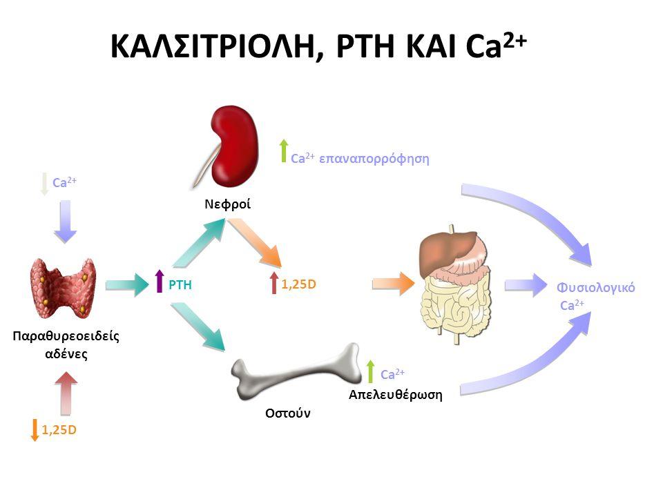 Φυσιολογικό Ca 2+ Απελευθέρωση Οστούν Νεφροί Ca 2+ επαναπορρόφηση PTH ΚΑΛΣΙΤΡΙΟΛΗ, PTH ΚΑΙ Ca 2+ Ca 2+ Παραθυρεοειδείς αδένες 1,25D