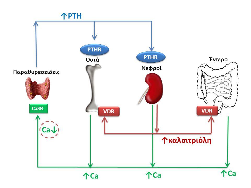 CaSR Ca↓ ↑Ca PTHR ↑PTH VDR ↑καλσιτριόλη Παραθυρεοειδείς Οστά Νεφροί Έντερο
