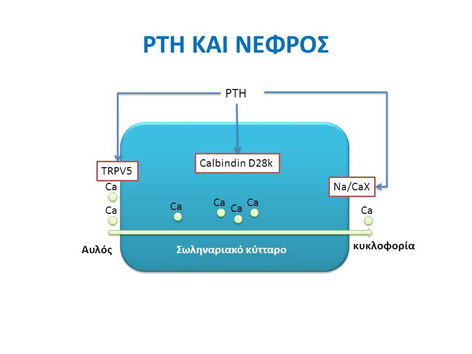 PTH ΚΑΙ ΝΕΦΡΟΣ Στο παχύ ανιόν σκέλος της αγκύλης του Henle Παρακυττάρια επαναρρόφηση του Ca ↑Na/K/2Cl συμμεταφορέα Άπω εσπειραμμένο σωληνάριο Διακυττάρια μεταφορά Ca 1) ↑ TRPV5 2) ↑ των πρωτεϊνών που άγουν την όδευση μέσω του κυττάρου, όπως η calbindin D28K 3) ↑Na/Cα ανταλλάκτη