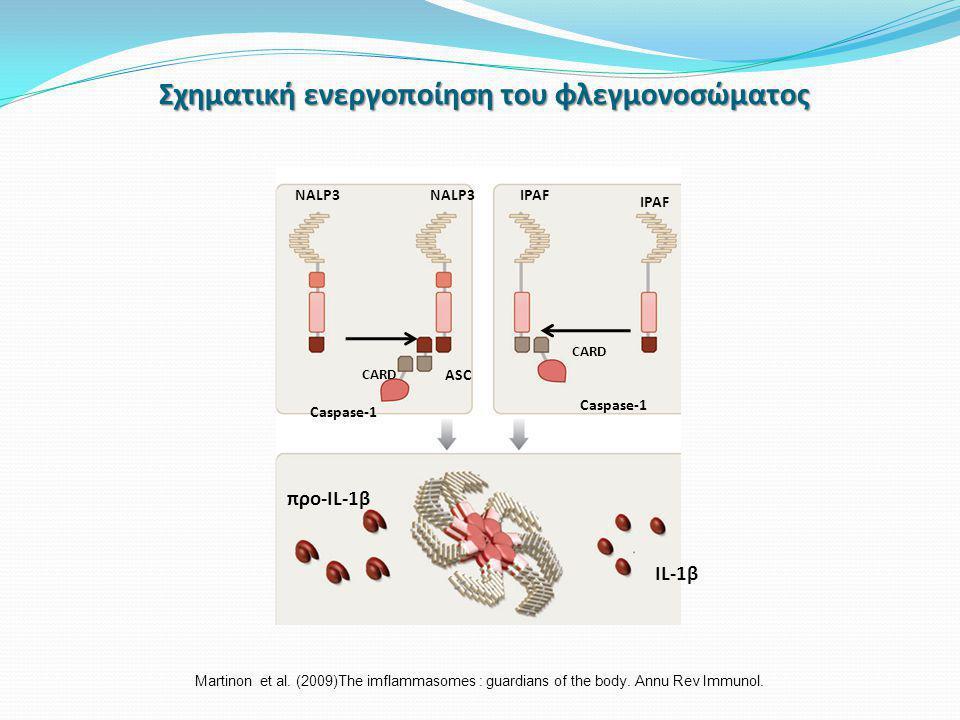 Σχηματική ενεργοποίηση του φλεγμονοσώματος NALP3 ASC Caspase-1 CARD Caspase-1 IPAF προ-IL-1β IL-1β Martinon et al.