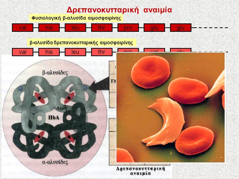 Δρεπανοκυτταρική αναιμία valleuhisthrproglu valleuhisthrprovalglu Φυσιολογική β-αλυσίδα αιμοσφαιρίνης β-αλυσίδα δρεπανοκυτταρικής αιμοσφαιρίνης