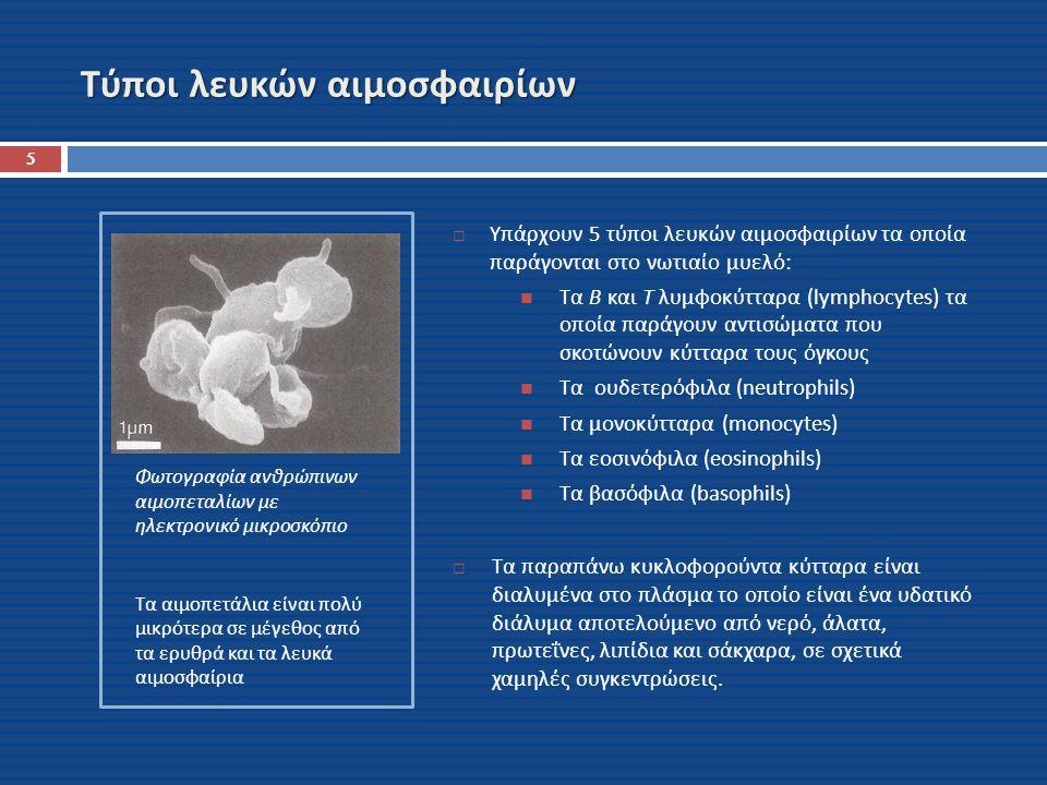 Τύποι λευκών αιμοσφαιρίων Φωτογραφία ανθρώπινων αιμοπεταλίων με ηλεκτρονικό μικροσκόπιο Τα αιμοπετάλια είναι πολύ μικρότερα σε μέγεθος από τα ερυθρά κ