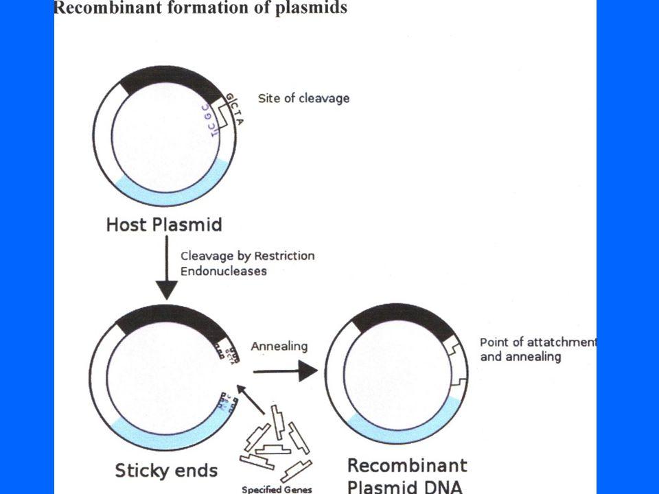 4) ….συνέχεια •Η βιοσυνθετική ινσουλίνη παράγεται σε καθαρή ενέσιμη εμπορική μορφή σε τρείς Ευρωπαϊκές χώρες (Γαλλία, Ελβετία, Δανία).