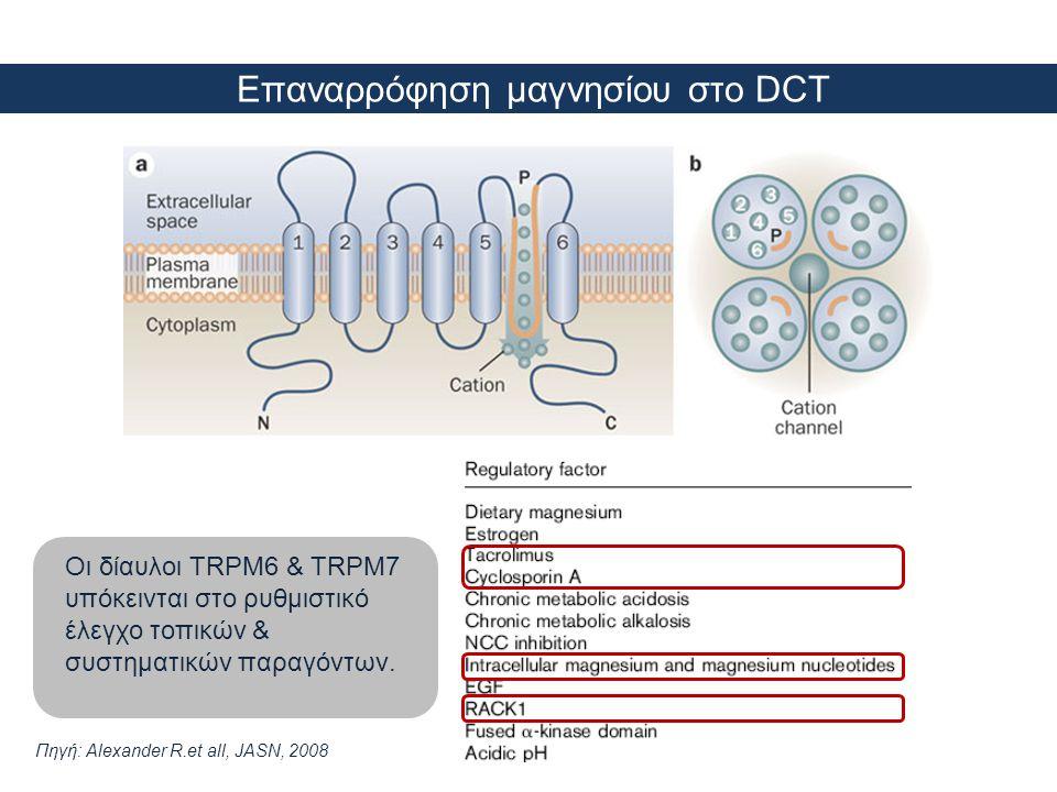 Επαναρρόφηση μαγνησίου στο DCT Οι δίαυλοι TRPM6 & TRPM7 υπόκεινται στο ρυθμιστικό έλεγχο τοπικών & συστηματικών παραγόντων. Πηγή: Alexander R.et all,