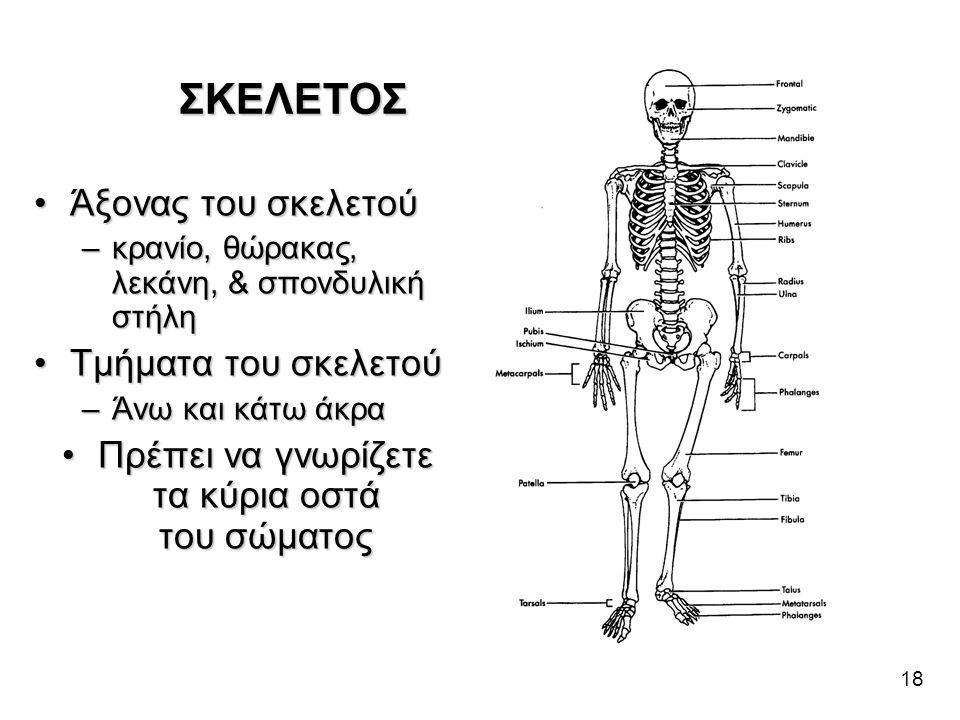 18 •Άξονας του σκελετού –κρανίο, θώρακας, λεκάνη, & σπονδυλική στήλη •Τμήματα του σκελετού –Άνω και κάτω άκρα •Πρέπει να γνωρίζετε τα κύρια οστά του σ