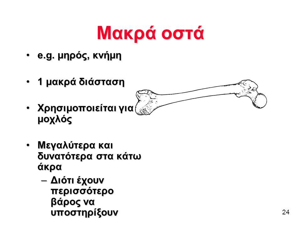 24 Μακρά οστά •e.g. μηρός, κνήμη •1 μακρά διάσταση •Χρησιμοποιείται για μοχλός •Μεγαλύτερα και δυνατότερα στα κάτω άκρα –Διότι έχουν περισσότερο βάρος