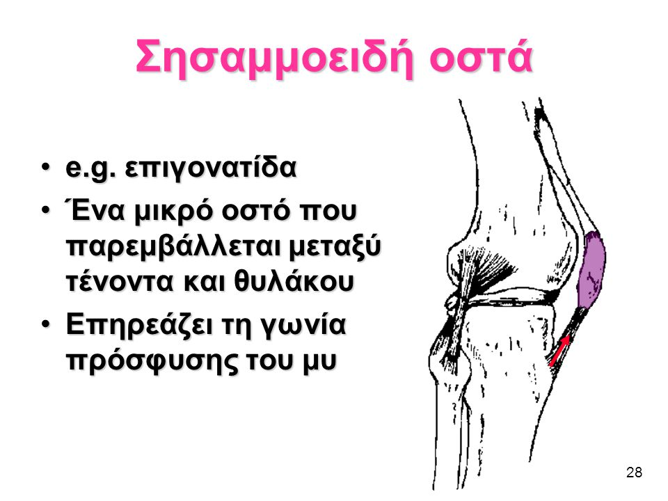 28 •e.g. επιγονατίδα •Ένα μικρό οστό που παρεμβάλλεται μεταξύ τένοντα και θυλάκου •Επηρεάζει τη γωνία πρόσφυσης του μυ Σησαμμοειδή οστά