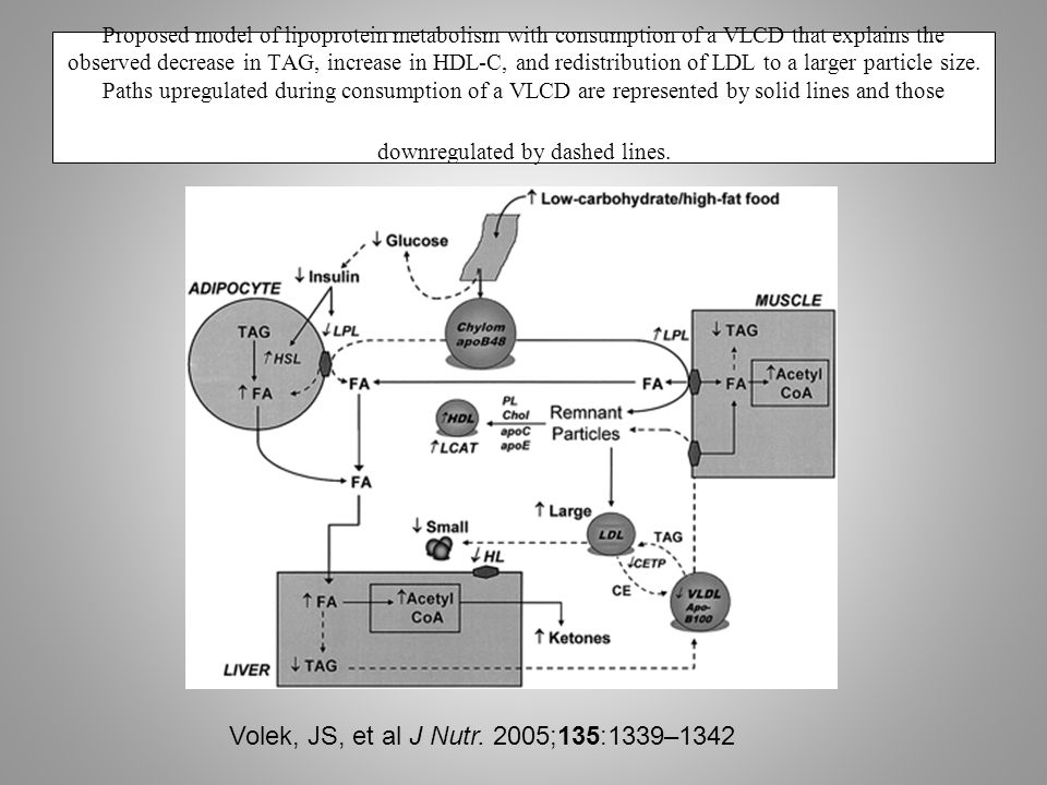 Proposed model of lipoprotein metabolism with consumption of a VLCD that explains the observed decrease in TAG, increase in HDL-C, and redistribution of LDL to a larger particle size.