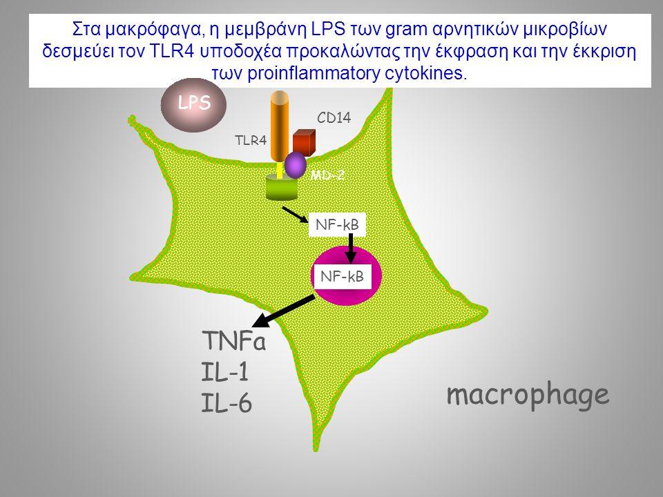NF-kB TNFa IL-1 IL-6 TLR4 MD-2 CD14 macrophage NF-kB Στα μακρόφαγα, η μεμβράνη LPS των gram αρνητικών μικροβίων δεσμεύει τον TLR4 υποδοχέα προκαλώντας την έκφραση και την έκκριση των proinflammatory cytokines.