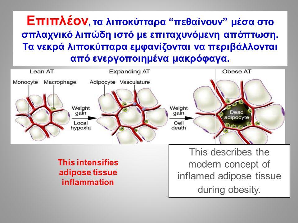 Επιπλέον, τα λιποκύτταρα πεθαίνουν μέσα στο σπλαχνικό λιπώδη ιστό με επιταχυνόμενη απόπτωση.