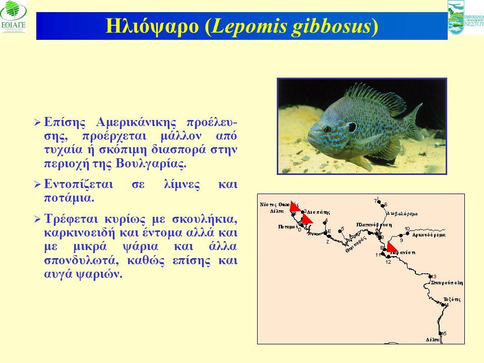 20 Ηλιόψαρο (Lepomis gibbosus)  Επίσης Αμερικάνικης προέλευ- σης, προέρχεται μάλλον από τυχαία ή σκόπιμη διασπορά στην περιοχή της Βουλγαρίας.  Εντο