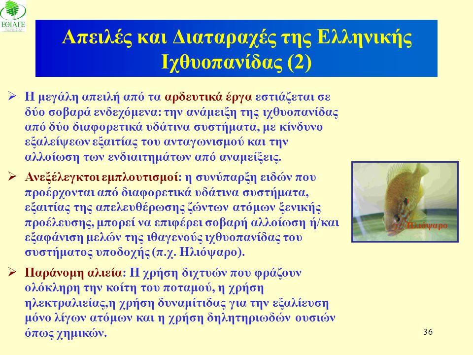 36 Απειλές και Διαταραχές της Ελληνικής Ιχθυοπανίδας (2)  Η μεγάλη απειλή από τα αρδευτικά έργα εστιάζεται σε δύο σοβαρά ενδεχόμενα: την ανάμειξη της