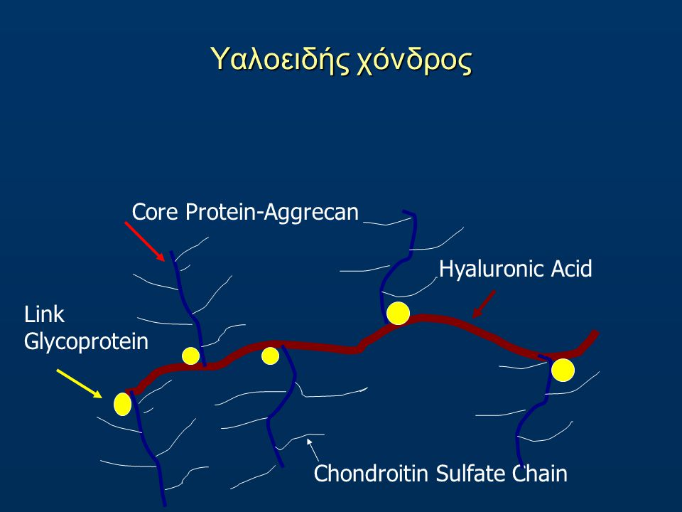 Hyaluronic Acid Core Protein-Aggrecan Chondroitin Sulfate Chain Link Glycoprotein Υαλοειδής χόνδρος