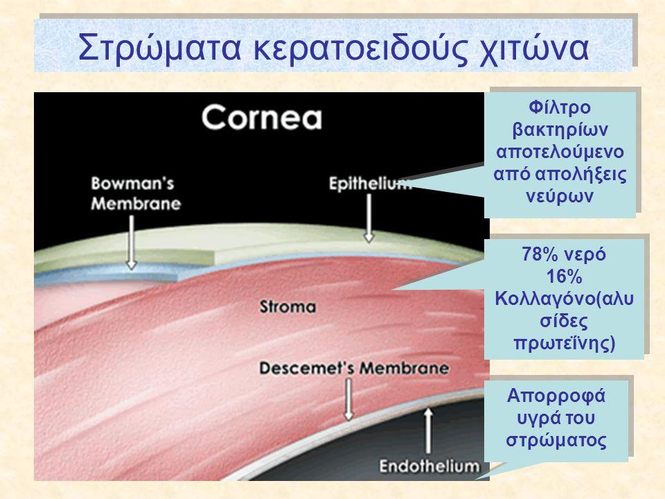 Στρώματα κερατοειδούς χιτώνα 78% νερό 16% Κολλαγόνο(αλυ σίδες πρωτεΐνης) 78% νερό 16% Κολλαγόνο(αλυ σίδες πρωτεΐνης) Φίλτρο βακτηρίων αποτελούμενο από απολήξεις νεύρων Απορροφά υγρά του στρώματος