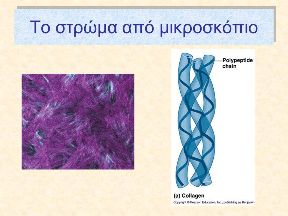 Το στρώμα από μικροσκόπιο